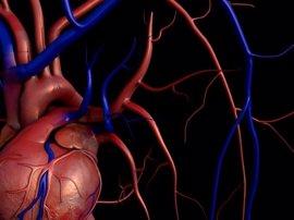 Identifican una molécula que abre las puertas al tratamiento personalizado de la insuficiencia cardiaca