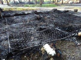 Un fuego en un asentamiento de Moguer destruye 43 chabolas sin daños personales