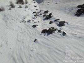 Rescatado un montañero herido en Espinosa de los Monteros (Burgos)