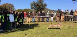 Comienza en Jaén la campaña de liberación de lince para mejorar genéticamente la especie
