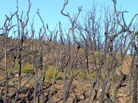 Se inicia la restauración de la zona afectada por el incendio de la zona norte de Tafalla