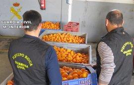 Investigadas cuatro personas por la sustracción y venta ilícita de 26.000 kilos de naranjas en Càrcer