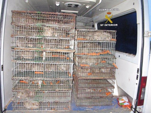 Conejos recuperados