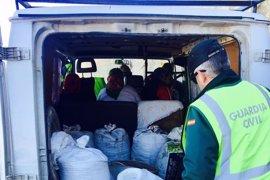 Ante el juez cinco personas sorprendidas robando 400 kilos de aceitunas en Cuevas del Campo