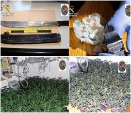 Cae en Abanilla un grupo criminal de jóvenes dedicado al cultivo y distribución de drogas