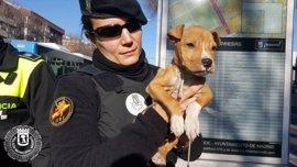 La Policía Municipal rescata a un cachorro de dos meses que presentaba síntomas de maltrato y desnutrición