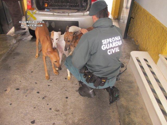 Perros rescatados por el Seprona
