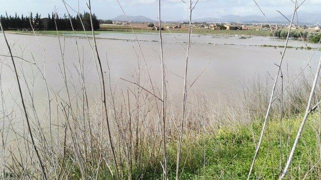 Los campos del Pla de Mallorca inundados tras el temporal