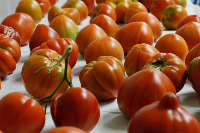 Estudian El Control De Una Mala Hierba Que Daña Al Tomate