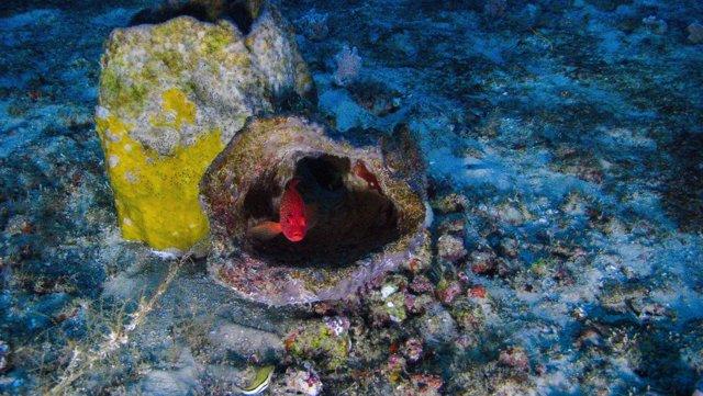 Arrecife de coral descubierto en el Amazonas y fotografiado por Greenpeace