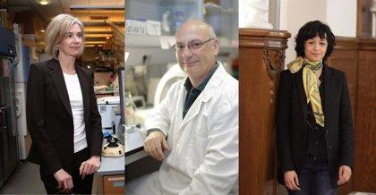 La Fundación BBVA reconoce a los creadores de la técnica que ha revolucionado la edición genética
