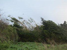 Activado el aviso amarillo en Euskadi desde este miércoles por vientos que pueden superar los 100 km/h