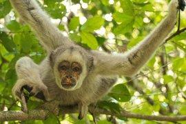 Mueren cientos de monos en la selva brasileña por la fiebre amarilla