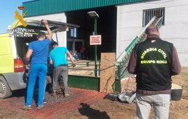 Detenido el dueño de un punto de compraventa de aceitunas en Villalba (Badajoz) por recibir producto robado