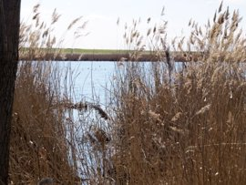 Life Humedales La Mancha recupera 300 hectáreas de orillas de lagunas en 10 pueblos de CLM