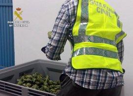 Detenidos dos individuos por robar presuntamente 350 kilos de alcachofa en Santomera