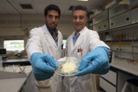 Impacto internacional de la investigación sobre compuestos protectores frente a radiación solar de un grupo de la UR