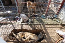 Los animales del zoo de Mosul se mueren del hambre atrapados en medio del conflicto