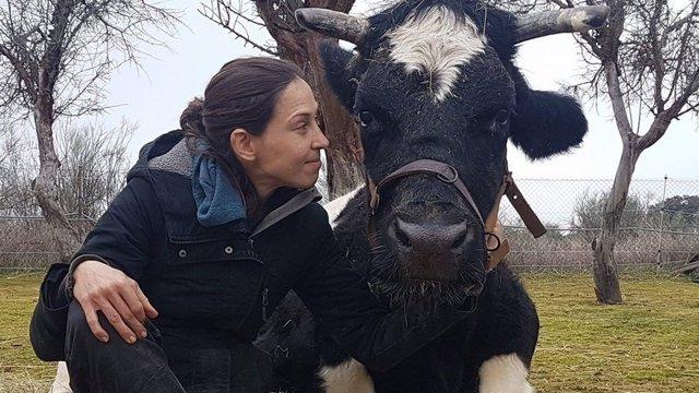 La vaca Carmen