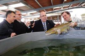 El Centro Ictiológico ha repoblado los ríos cántabros con más de 5 millones de salmones desde 1998