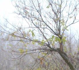 Aviso por fuertes vientos en toda C-LM, especialmente en las provincias de Albacete y Cuenca