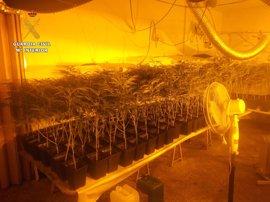 Detenida una madre y una hija en Seseña por cultivar 1.085 plantas de marihuana