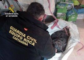 La Guardia Civil detiene a un individuo por sustraer 3 km de cableado eléctrico de una urbanización de Corvera