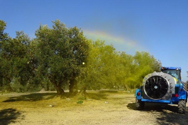 Ratamiento en campo con trazador en olivar tradicional
