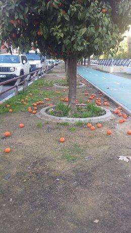 Las naranjas pueblan los parterres de la ciudad.