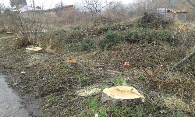 Zona de Barruelo afectada por la tala de árboles.