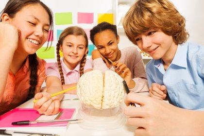 El cerebro del niño: ¿cómo sintonizar con sus dos hemisterios?