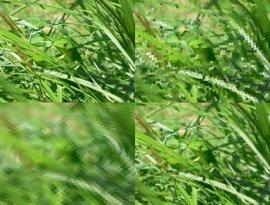 Una aplicación permite obtener imágenes desde el punto de vista de un animal
