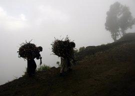 La ONU plantará un millón de árboles en Etiopía para combatir la deforestación cerca de campos de refugiados