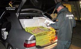 La Guardia Civil decomisa 446 kilos de productos pesqueros inmaduros valorados en 4.900 euros