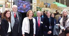 Taiwán, Austria y República Checa, donde más sube el valor de las exportaciones hortofrutícolas andaluzas