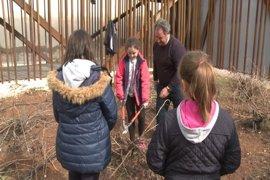 Unos 500 escolares participan en talleres de poda en Almendralejo (Badajoz) para conocer el trabajo vitivinícola