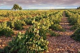 La DOCa Rioja incrementa el valor de sus ventas en 2016 y consolida el récord alcanzado el año anterior