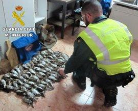 Sorprendidos en Sant Jordi dos cazadores con 69 aves muertas a raquetazos