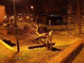 El fuerte viento provoca la caída de árboles y chapas metálicas sobre la calzada