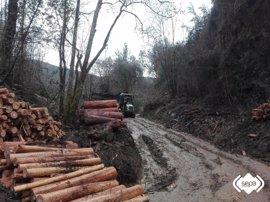 Herido un trabajador tras caerle un árbol encima cuando cortaba madera en Pravia
