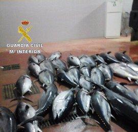 Intervenidos en el puerto pesquero de Tarifa 1.582 kilos de atún rojo pescado ilegalmente