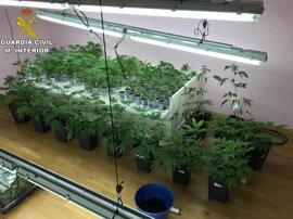 Diez detenidos y dos plantaciones de marihuana desmanteladas en Rivas