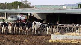 Agricultura destina 200.000 euros al desarrollo de programas y actuaciones sanitarias en explotaciones ganaderas