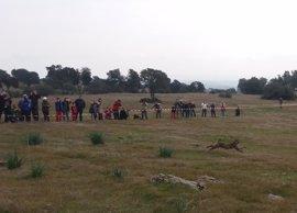 Liberados dos nuevos ejemplares de lince ibérico en la zona de reintroducción del río Guarrizas en Jaén