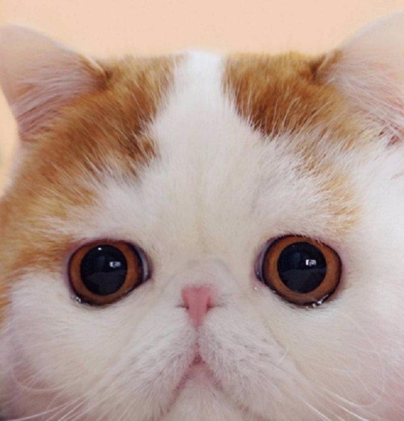 Día Internacional del Gato: 40 curiosidades de los gatos que ...