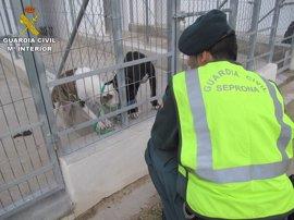 Muere un hombre atacado por cinco perros de raza peligrosa de su vecino en Beniarbeig