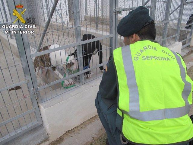 Un agente observa a dos de los perros que al parecer mataron a un vecino en Beni