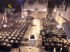 Detenido el dueño de un restaurante con 270 plantas de marihuana en el almacén del local