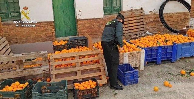 Naranjas robadas en Gibraleón (Huelva).