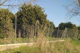 Ecologistas denuncia una tala de árboles plantados en 1992 en La Algaba mediante una acción participativa
